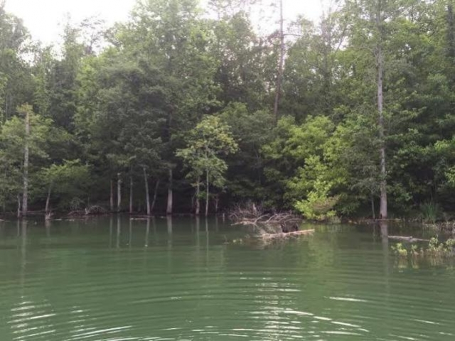 Wildcat Hollow Rd Lot 855 New Tazewell, Tn
