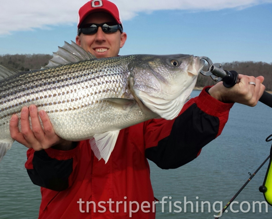 Striper fishing guide services on norris lake norris for Tennessee fishing guide