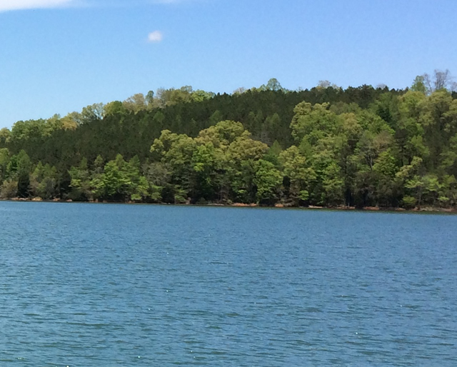 Dotson Creek Norris Lake